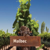 Malbec grape wine Mendoza Argentina Furlong Contours Travel