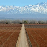 Landscape of Salentein winery and vineyard of Mendoza Argentina LuciaZirolli Furlong Contours Travel
