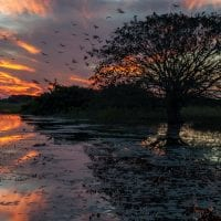 Brazil Araras Pantanal EcoLodge - Sunset tree Contours Travel