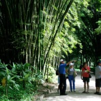 Activity walk through the Botanical Gardens in Rio de Janeiro Brazil Tim Pierik Contours Travel