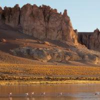 Chile Tierra Atacama flamingoes Contours Travel