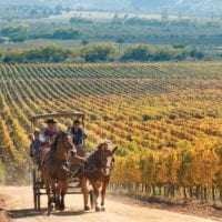 Colchagua valley Martin Edwards Chile Contours Travel