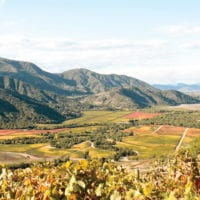 Landscape of wine Valley Santiago Chile Protours Contours Travel