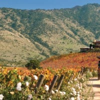 Landscape of wine valley Chile Proturs Contours Travel
