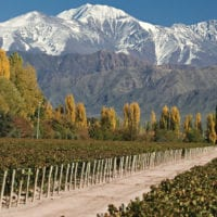 Landscape of wine valley with Andes in the back Chile Proturs Contours Travel