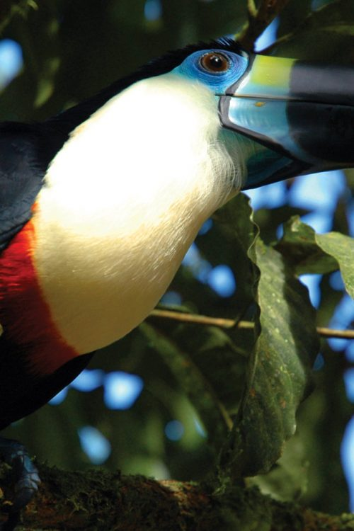 Ecuador Amazon Advantage Travel wildlife toucan