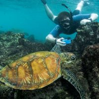 Activities snorkelling sea turtle Galapagos Ecuador Klein Contours Travel