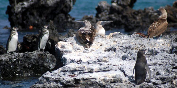 Galapagos Wildlife Discovery