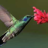 Hummingbird in Boquete Panama Contours Travel