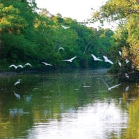 Birds over the Amazon River Iquitos Peru Delfin Cruise Contours Travel