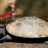 Butterfly and Turtle Peru Amazon - Contours Travel