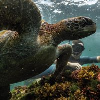 Wildlife activity snorkelling turtle Post Office Floreana Galapagos Ecuador courtesy of Metropolitan Touring Contours Travel