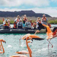 Wildlife flamingos Baronesa Floreana Galapagos Ecuador courtesy of Metropolitan Touring Contours Travel