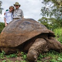 Wildlife tortoise highlands of Santa Cruz Galapagos Ecuador courtesy of Metropolitan Touring Contours Travel